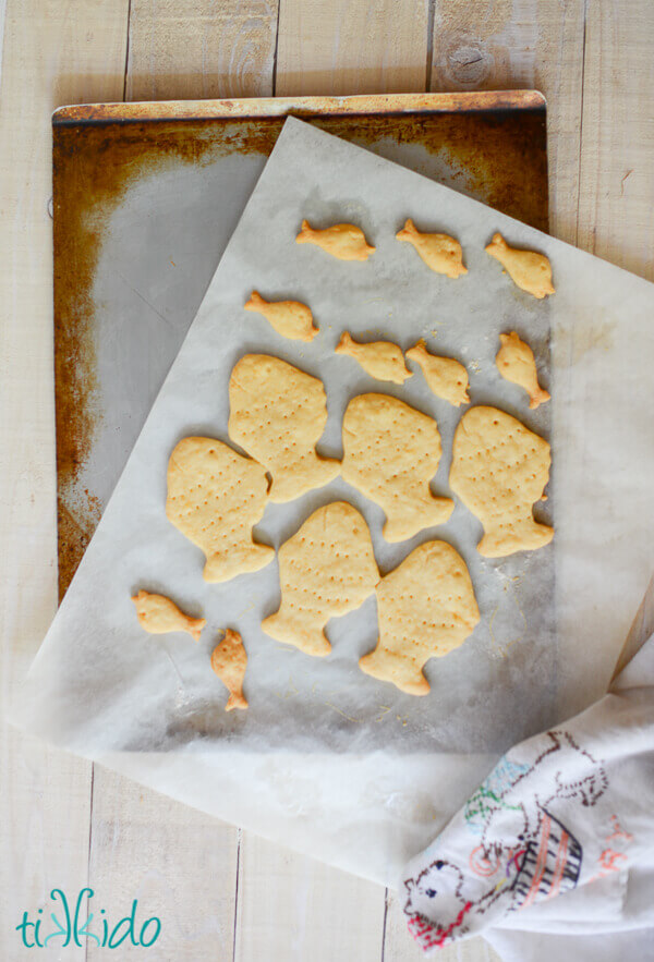 Homemade goldfish crackers baked on a parchment lined cookie sheet.