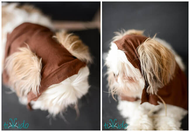 Easy ewok no sew dog costume tutorial tikkido materials for no sew star wars dog ewok costume solutioingenieria Image collections