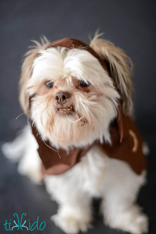Easy ewok no sew dog costume tutorial tikkido and there you have it your very own furry ewok dog costume it took less than 5 minutes to make and i cant wait for halloween can you guess what costume solutioingenieria Gallery