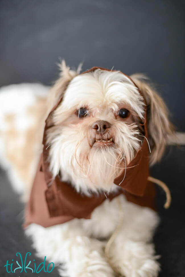 Easy Ewok No Sew Dog Costume Tutorial Tikkidocom